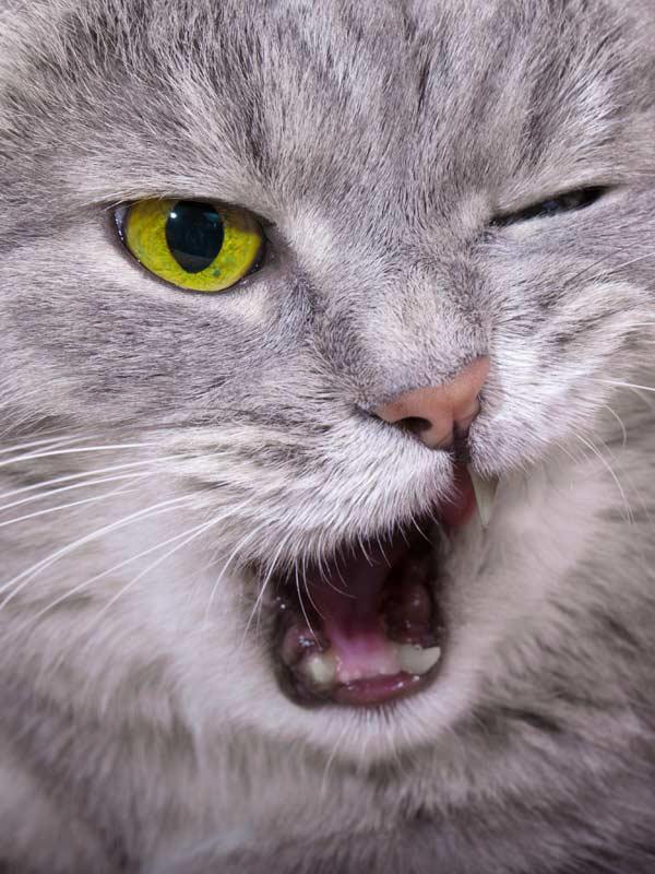 Blinzelnde Katze