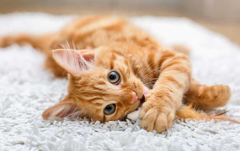 Tierheilpraxis Pia Mayen - Katze auf weißem Teppich