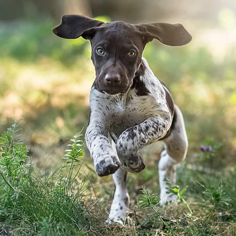 Tierheilpraxis Pia Mayen - Kleiner Hund auf der Wiese